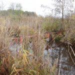PotzlowerSeegraben-GitteramAuslaufGroßerPotzlowsee-1-